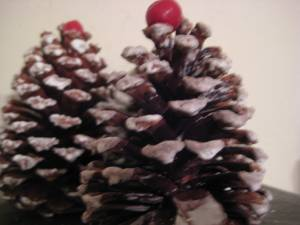 We made these by taking pine cones, water/powder sugar mixture and cranberries!